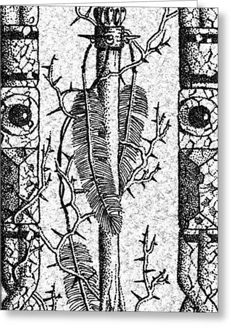 Feathers Thorns And Broken Arrow Bookmark No2 Greeting Card