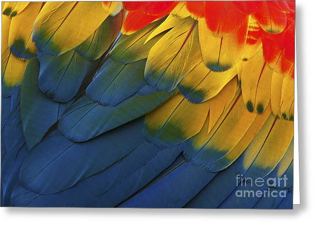 Feathery Details... Greeting Card by Nina Stavlund
