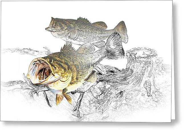 Feeding Largemouth Black Bass Greeting Card