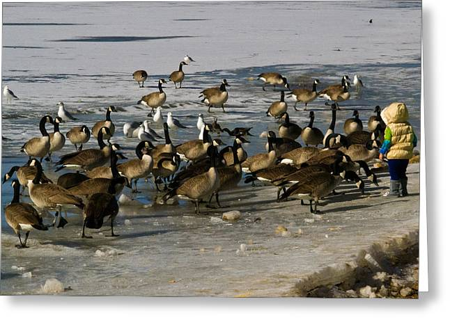 Feeding The Geese Greeting Card by Matt Radcliffe