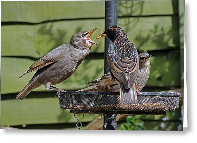 Feeding Time Greeting Card
