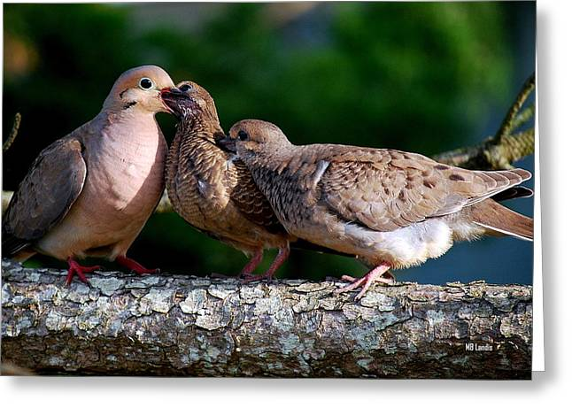 Feeding Twin Mourning Doves Greeting Card by Mary Beth Landis