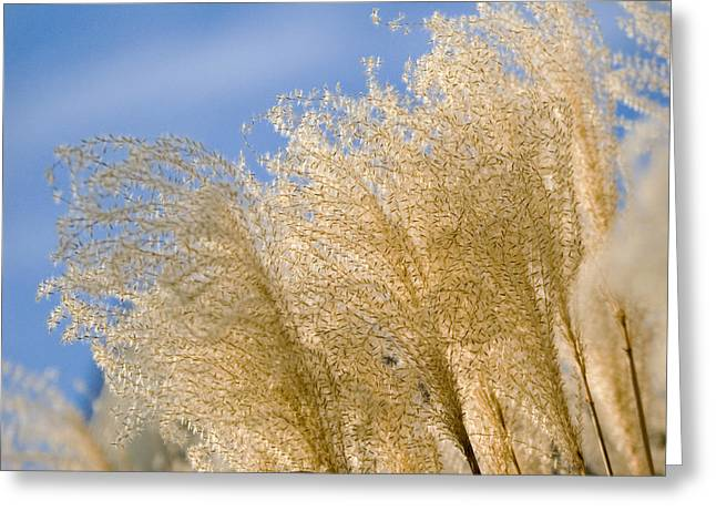 Feel The Breeze Greeting Card by Robert Culver