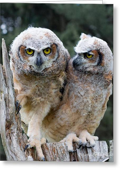 Feeling A Little Grumpy Are We? Greeting Card by Barbara McMahon