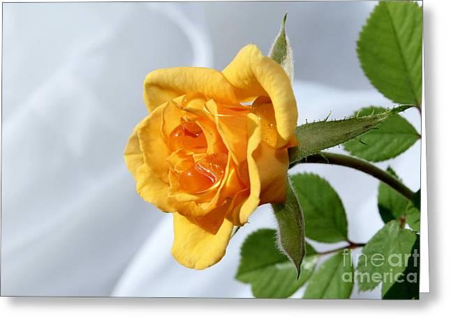 Feeling Peachy Greeting Card by Krissy Katsimbras