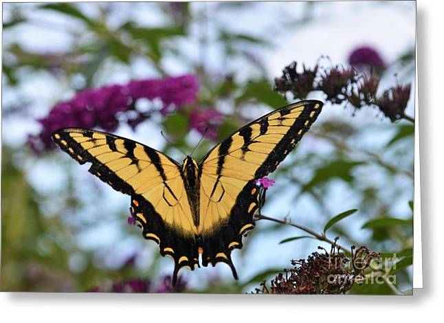 Greeting Card featuring the photograph Feeling Pretty II by Judy Wolinsky
