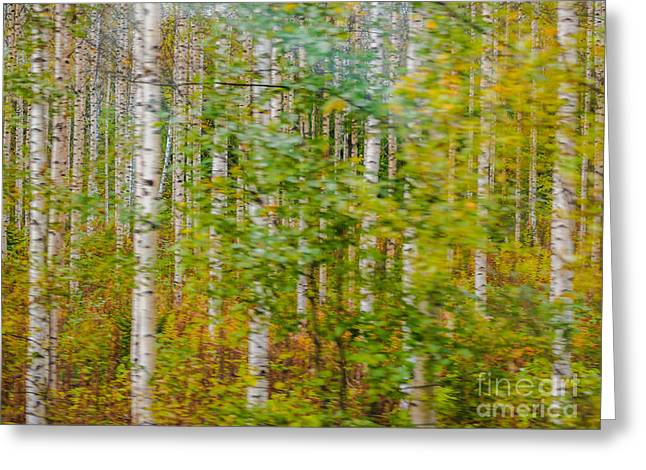 Feels Like Autumn In A Forest Of Birch Trees Greeting Card