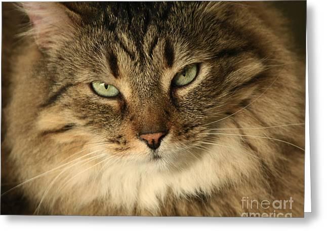 Feline Pleasures Greeting Card