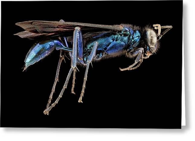 Female Blue Mud Dauber Wasp Greeting Card