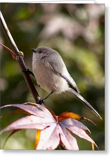 Female Bushtit Greeting Card