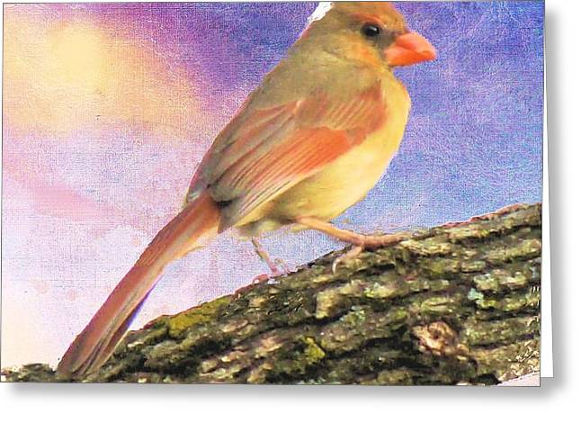 Female Cardinal Away From Sun Greeting Card by Janette Boyd