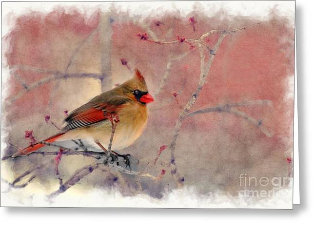 Female Cardinal Portrait Greeting Card
