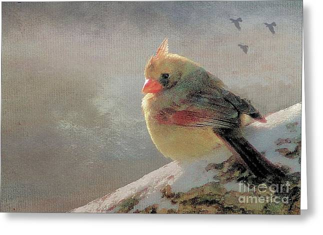 Female Cardinal V Greeting Card by Janette Boyd