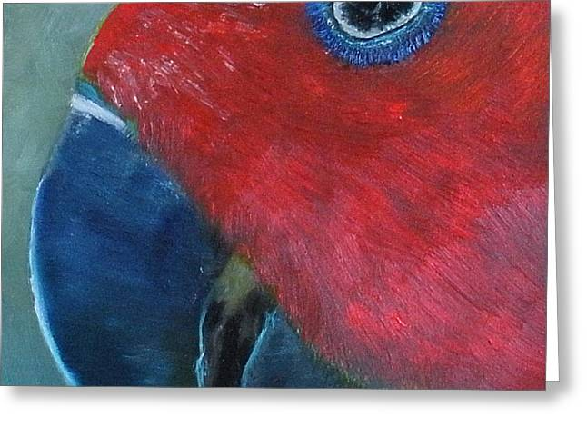 Female Eclectus Greeting Card