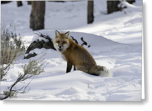 Female Fox Greeting Card