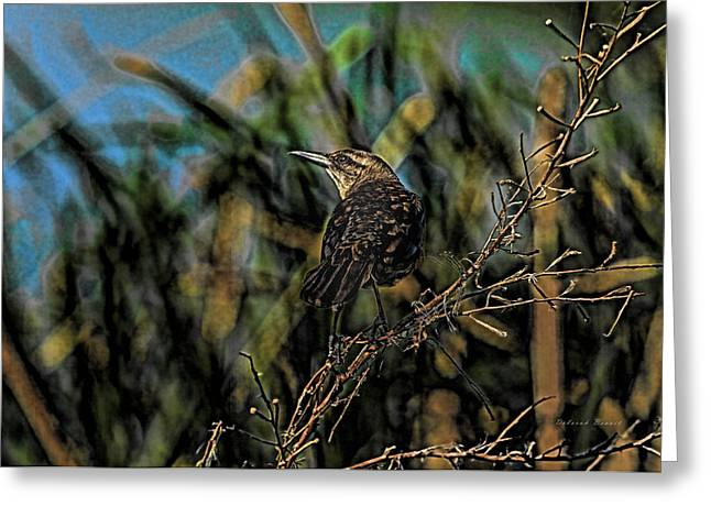 Female Grackle On The Dark Side Greeting Card by Deborah Benoit