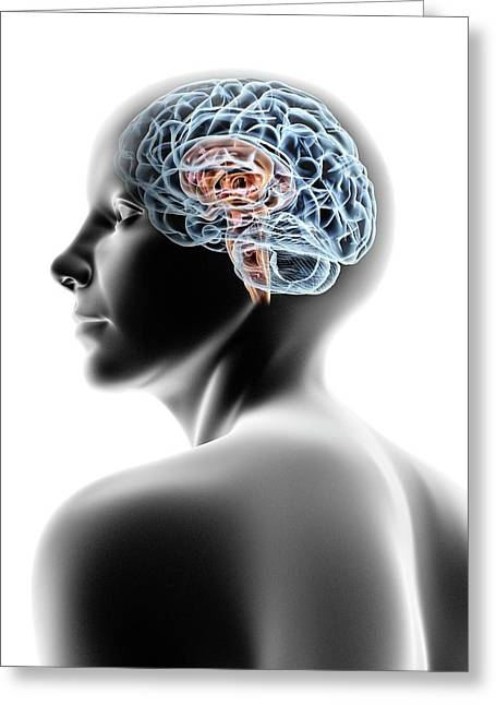 Female Human Head With Brain Greeting Card