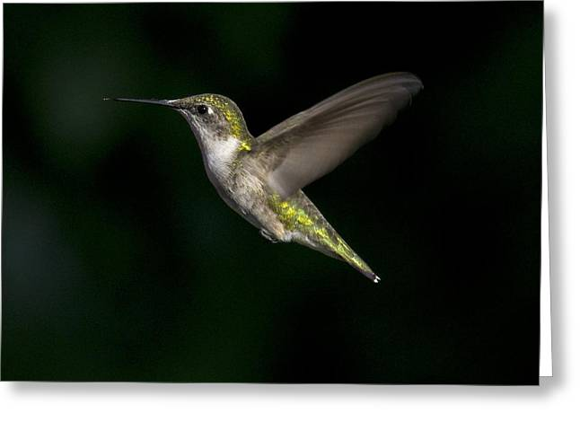 Female In Flight 4 Greeting Card by Eric Mace