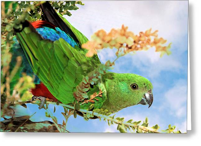 Female King Parrot Greeting Card
