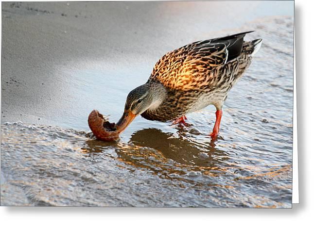 Greeting Card featuring the photograph Female Mallard Duck  by Ann Murphy