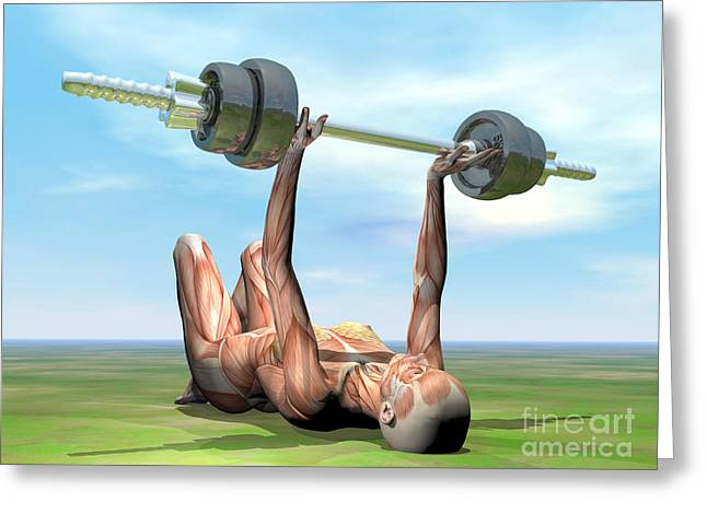 Female Musculature Exercising Greeting Card by Elena Duvernay