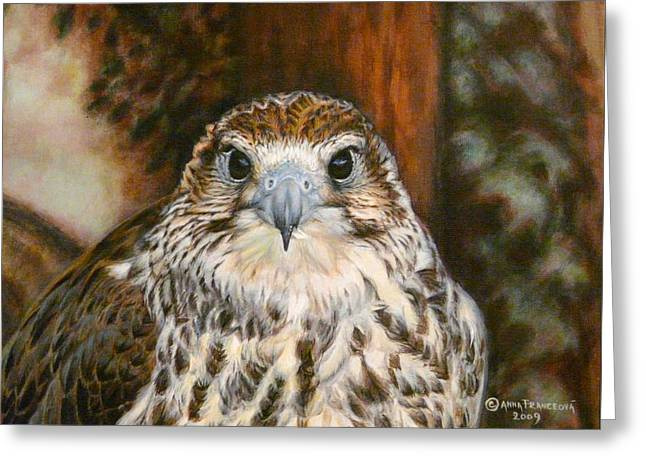 Female Of Saker Falcon Greeting Card by Anna Franceova