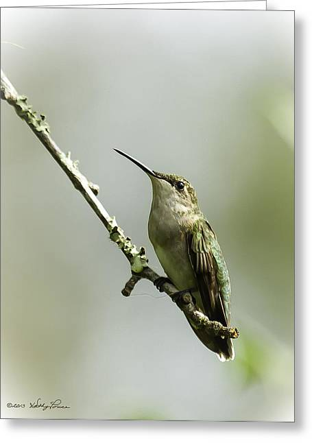 Female Ruby-throated Hummingbird 1 Greeting Card