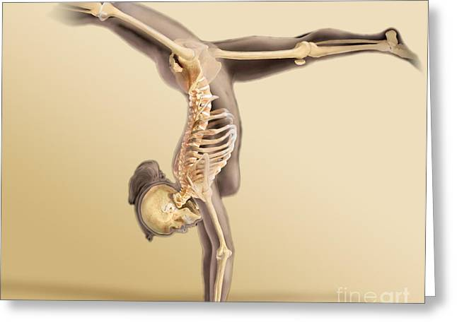 Female Skeletal System Greeting Card by Anatomical Travelogue