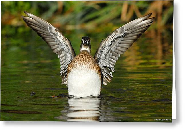 Female Wood Duck Greeting Card
