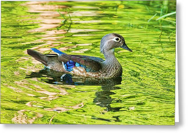 Female Wood Duck Greeting Card by Deborah Benoit