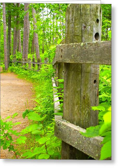 Fence In Nature Greeting Card by Andrew Johnson