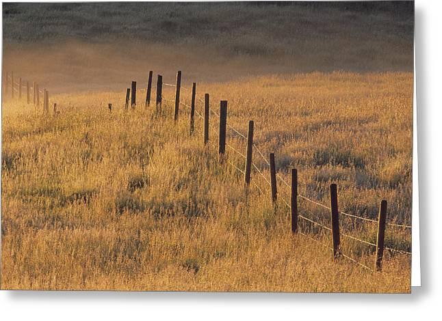 Fence In Pasture Near Cochrane Greeting Card by Darwin Wiggett