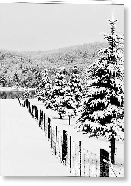 Fence Line Greeting Card by Tim Wilson