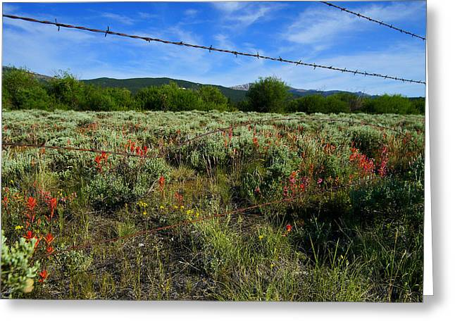 Fence Mending Greeting Card by Jeremy Rhoades