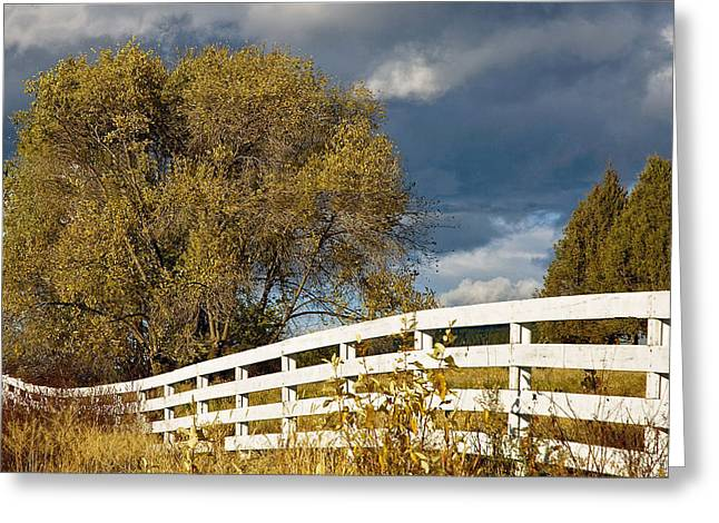 Fence Greeting Card by Michele Wright