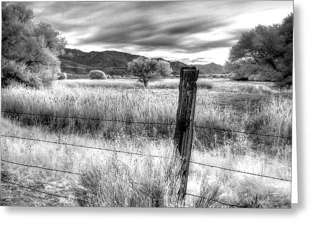 Fence Post In The Meadow Greeting Card