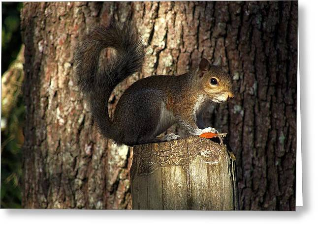 Greeting Card featuring the photograph Fence Post Squirrel  by Chris Mercer