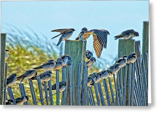 Fence Sitters Greeting Card by Constantine Gregory