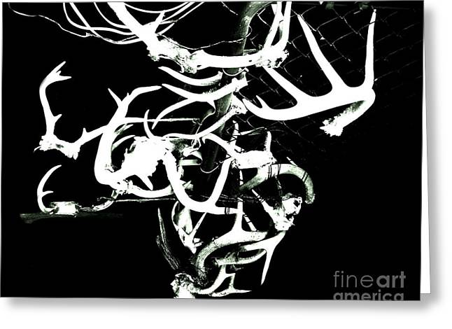 Greeting Card featuring the photograph Fenced Antler by Amy Sorrell