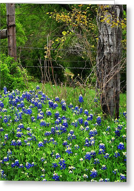 Fenced In Bluebonnets Greeting Card by David and Carol Kelly