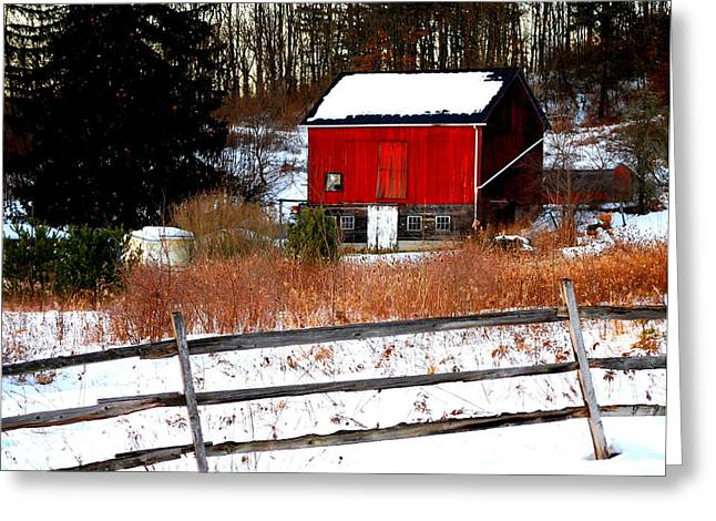 Fenced In  Greeting Card by Mary Beth Landis