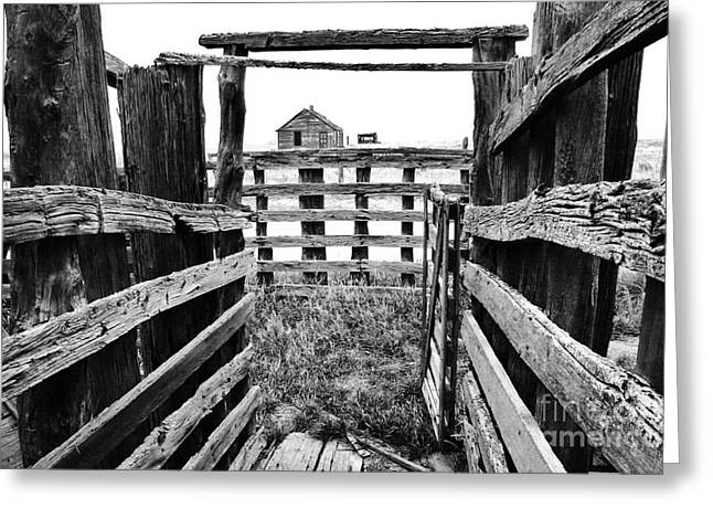 Fenced Greeting Card by Ronnie Glover