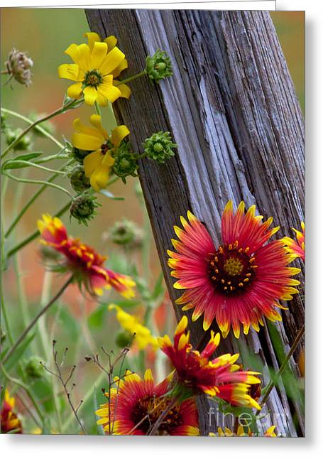 Fenceline Wildflowers Greeting Card by Robert Frederick