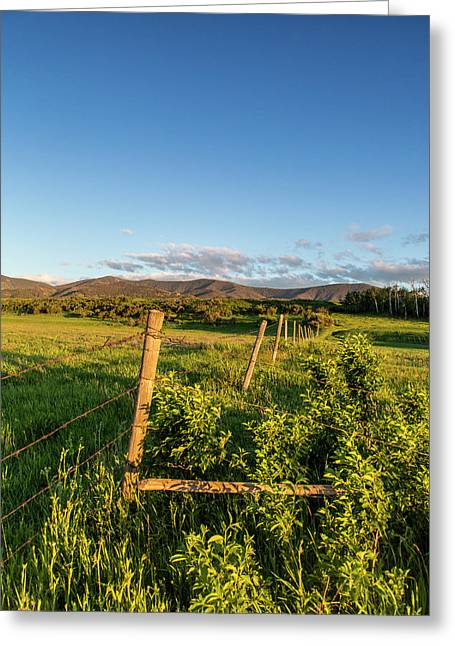 Fencerow In Pastureland Greeting Card