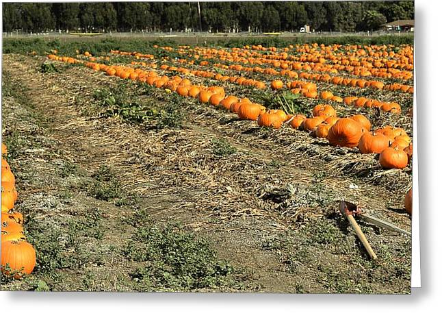Fencing The Pumpkin Patch Greeting Card by Michael Gordon