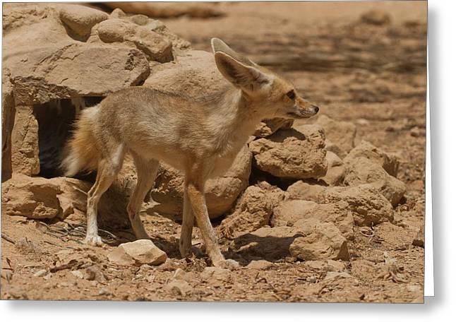 Fennec Fox Greeting Card by Photostock-israel