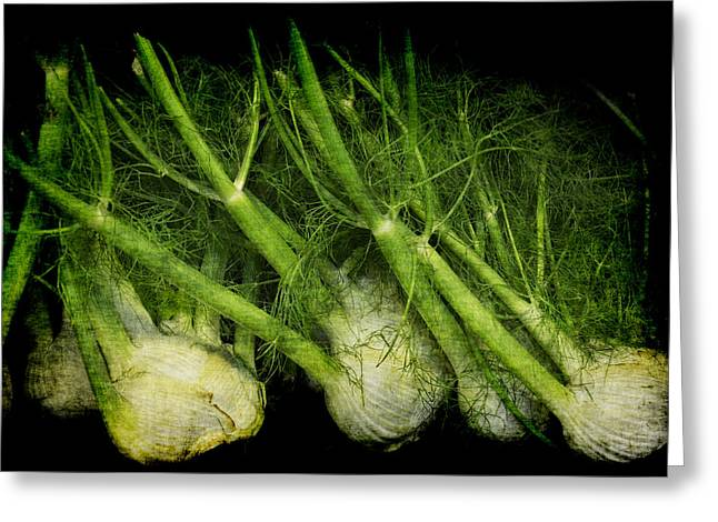 Flemish Fennel Art Greeting Card
