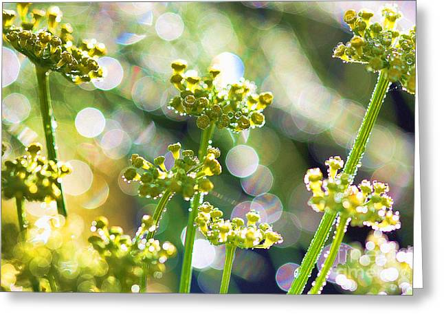 Fennel Morning Dew Greeting Card by Rebeka Dove