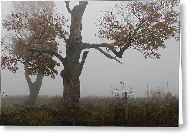 Fenner Trees In Fog Greeting Card