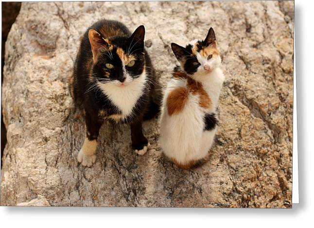 Feral Cat And Kitten Greeting Card
